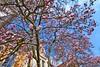 Spring in the city (Tobi_2008) Tags: frühling spring baum tree blüten blossoms himmel sky strase street grosenhain sachsen saxony deutschland germany allemagne germania
