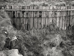 20180414-0080-Edit (www.cjo.info) Tags: bw eastlothian europe europeanunion m43 m43mount microfourthirds nikcollection northberwick olympus olympusmzuikodigital25mmf18 olympuspenf scotland silverefexpro silverefexpro2 unitedkingdom westerneurope yellowcraigs beach blackwhite blackandwhite coast coastal digital fence flora grass landscape monochrome ocean plant sand sea seascape water wood