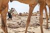 Afar, Ethiopia (gstads) Tags: afar afardepression afarregion ethiopia ethiopian camel camels salt saltmine work working worker workers labor labour heavy danakil danakildepression