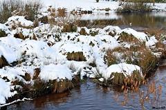 Photos Marco BP (37)_GF (marcbihanpoudec) Tags: bretagne neige plabennec plan deau lac banc arbres