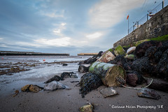 Barrel's at the Harbour... (corinna.nolan) Tags: moss harbour bray low tide ireland green rocks