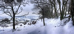 A winter return (OutdoorMonkey) Tags: winter march snow cold ice frost panorama panoramic quantocks quantockhills somerset hillside hill tree trees wood woodland treeline countryside outside outdoor rural nature natural scenic scenery