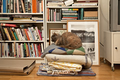 (Beathe) Tags: sando home livingroom book piles plaid blankets cat tulla books bookshelf img6756