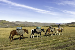 Supply Chain (Hubert Streng) Tags: horse pampa torresdelpaine supply convoi patagonia andes chile