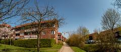 Wohnstraße mit Zierkirsche, Erpel und zwei Kränen (p.schmal) Tags: olympuspenf hamburg farmsenberne zierkirschen