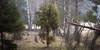 Juniper | Kataja (Olli Tasso) Tags: nurmi lempäälä suomi finland juniper spruce birch koivu kuusi kataja pelto field nature outdoors luonto maisema landscape scenery fog mist sumu usva spring kevät morning aamu