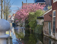 Delft (BelgiumOnePoint) Tags: hollande netherlands moulins mills molens delft porcelaine eau d850 nikon c1