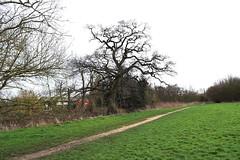 DSC_8957 (PeaTJay) Tags: nikon england uk gb royalberkshire reading winnersh flowers plants trees bushes