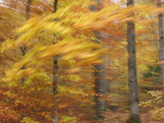 blurred fall scenery / icm (veroniquesimard) Tags: forest fall icm blur automne mouvement