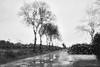 _DSC3421 (mario tonolini) Tags: bianconero bw pioggia strada