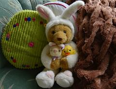 Can I Be the Easter Bunny, Mama? (BKHagar *Kim*) Tags: bkhagar bear teddy teddybear errol bunny easterbunny easter friends chick animal toy stuffed pillow buttons fur htbt teddybeartuesday