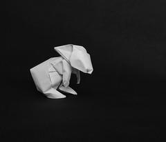 Rabbit (Jose_Herrera_B) Tags: origami origamiart origamidesign joseherreraorigami joseherrera paperfolding papiroflexia foldedpaper fabriano wetfold rabbit focus blur