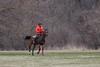 horse at horsetail lake. 2018 (timp37) Tags: rider horseback horse horsetail lake illinois april 2018 palos