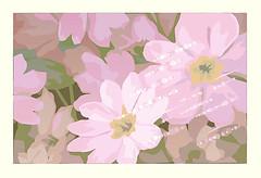 Unknown flower (Japanese Flower and Bird Art) Tags: flower akiko yoshimura modern screenprint print japan japanese art readercollection