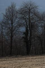am Wegrand (inge.sader) Tags: landschaft landscape südtirol brixen feldthurns klausen sony sonyalpha7ii frühling eisacktal