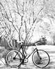 RoundShapes (John F. Roberts) Tags: leicasl 50mmsummiluxasph bike park phoenix bw flickr friday flickrfriday roundshapes palo verde trees