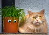 My cat grass and I (FocusPocus Photography) Tags: linus katze kater cat chat gato tier animal haustier pet gras grass