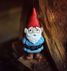 The Gnome (Through Serena's Lens) Tags: mm macromondays onceuponatime thegnome gnome button macro germanfairytale dof bokeh wood grimmsfairytales