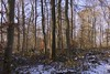 Winter woodland (Englepip) Tags: winter woodland landscape snow trees plants foliage beech leaves branches twigs sky blue sunlight