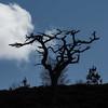 Hope (prajpix) Tags: pine scots tree trees wood woods pinewoods forest einig glen sutherland highlands scotland caledonian ancient nature native silhouette sky