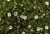 summer flowers (Greg Rohan) Tags: summerflowers blooming bloom bud yellow white pink plant nature whiteflower flowers flower daisies daisy d750 nikkor nikon 2018 garden macro