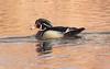 Wood Duck at Sunset (vischerferry) Tags: woodduck sunset duck waterfowl goldenhour aixsponsa newyorkstate bird halfmoon mohawkriver perchingduck reflection