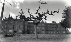 Abandoned Asylum (Michelle O'Connell Photography) Tags: scotland hospital mentalasylum victorianmentalinstitution mentalinstitute derelictbuilding michelleoconnellphotography