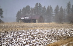 _DSF3472 (Vladimir Gazoukin) Tags: canada country barrie bokeh vladimirgazoukin field winter snow sky trees barn