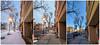 Week 14 Vision: Triptych (dennis armada) Tags: dogwoodphotographychallenge vision dogwood dennisa clifton cliftonnewjersey nj newjersey spring tripych pixel week14 googlepixel darmada week14visiontriptych