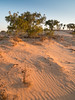 innamincka dune - 2149 (liam.jon_d) Tags: australia australian billdoyle desert dune inland innamincka innaminckaregionalreserve innaminckarr landscape outback pattern regionalreserve remote remotearea reserve ripple sa sanddune sandy southaustralia southaustralian stony texture windblown