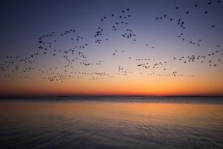 birds on the go