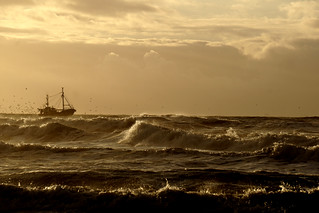 seagulls sun and sea