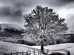 Fine inverno (Fernando De March) Tags: invernotempestanevicatenevefiltrodrammatico
