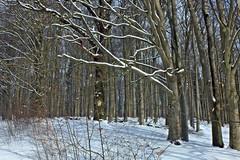 Winterliche Granitz (lt_paris) Tags: urlaubinbinz2018 binz rügen granitz schnee winter wald bäume