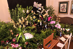 2018 JOS Show-0331 (tbottom) Tags: jos jacksonvilleorchidsociety jimroberts macrivenbark macsorchids staugustineorchidsociety suebottom floridasuncoastorchids thanhnguyen artrussell terrybottom orchids orchidsociety orchidshow orchidpictures cattleyas dendrobium oncidiums phalaenopsis