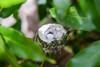 Nest of Hummingbird with Two Eggs Inside - Oakland, California, USA (takasphoto.com) Tags: alameda alamedacounty allenshummingbird allenkolibri allenskolibrie america animal animalia anna annas annashummingbird aves bayarea berkeley bird california californiastate chordata colibridallen eeuu eastbay estadosunidos hummingbird norcal northamerica northerncalifornia oakland portofoakland ssasin sfbayarea sfbay sanfrancisco sanfranciscobayarea selasphorus selasphorussasin sustainability trochilidae trochiliformes usa unitedstates unitedstatesofamerica westcoast westoakland colibrìdiallen colibrídeallen калифорния окленд уикипедия אוקלנד أوكلاند النپدیچڑی اوکلند アマツバメ目 アメリカ合衆国 アラメダ郡 アレンハチドリ イーストベイ オークランド カリフォルニア サンフランシスコ ハチドリ科 加利福尼亚 加州 北カリフォルニア 北米 奥克兰 港湾都市 王府 米国 美国 西海岸 오클랜드