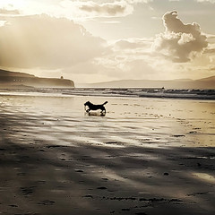 365-083 Running Free [explored] (Christine Schmitt) Tags: ansh dog running beach portstewart mussenden temple 365the2018edition 3652018 day83365 24mar18 explore explored