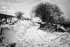 Snowy Lane (Missy Jussy) Tags: snow landscape lancashire lane rochdale fence trees sky fields mono monochrome bw blackwhite blackandwhite outdoor outside countryside winter britishweather beastfromtheeast canon canon5dmarkll canon5d canoneos5dmarkii 50mm ef50mmf18ll ef50mm fantastic50mm
