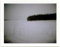 (babireley) Tags: polaroid250 fujifilmfp100c pottercounty pa pottercountypa pawilds snow winter