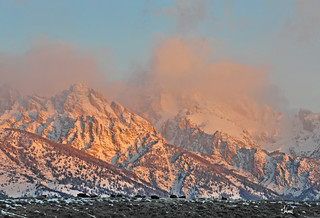 Bison on the ridge as sunrise hits the Tetons - 9684b+