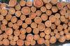 Hochstaplerei (wolf238) Tags: holz stamm stämme baume wald forst stapel estacademadeira woodpile holzstapel bois