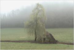 La casetta in campagna (Bertalberto) Tags: italy piemonte piedmont italia landscape nebbia nuvolebasse mist torino turin canoneos7d brumeetbrouillard