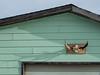 Dec 22 - Gander-12 (Pine Clad Hills) Tags: carmanville gander newfoundland ocean seascape water