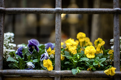 Nobody can lock up hope! (Lemesis) Tags: hope cage nobody spring flowers colors