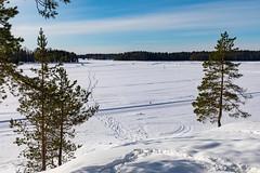 Ähtäri Zoo, Finland (Ninara) Tags: ähtäri ähtärizoo winter wildanimal animal zoo talvi lake