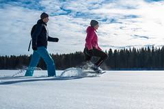 Snowshoe walkers in Rauhalahti 2 (VisitLakeland) Tags: jätkänkämppä rauhalahti kuopio finland winter ice snow lumi talvi jää snowshoe lumikenkä outdoor ulkoilu retkeily
