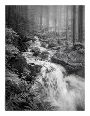 melting snow (paolo paccagnella) Tags: primephoto snow landscape alpi alps wood magicforest bn ass bw blackandwhite water waterscape white eos territorio veneto ambiente acqua activity aquae canonequipment foto flickr framework fiume flowers italy photo phpph paesaggio phpph© grey falls fog monochrome minimalism nero nebbia yahoo:yourpictures=monochrome paolopaccagnella google pics googleimages