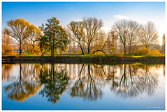 Miroir mon beau miroir (Pascale_seg) Tags: paysage landscape river riverscape reflet reflection miroir tree cloud nuage hiver moselle lorraine france nikon bleu blue