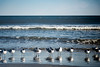 Keep Your Feet Wet (matthewkaz) Tags: seagulls gulls birds ocean atlanticocean water waves reflection reflections myrtlebeach sc southcarolina 2018