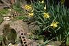 Narcisos (AlvarHyls) Tags: narcisos huerta patio jardín flores rural naturaleza silvestre